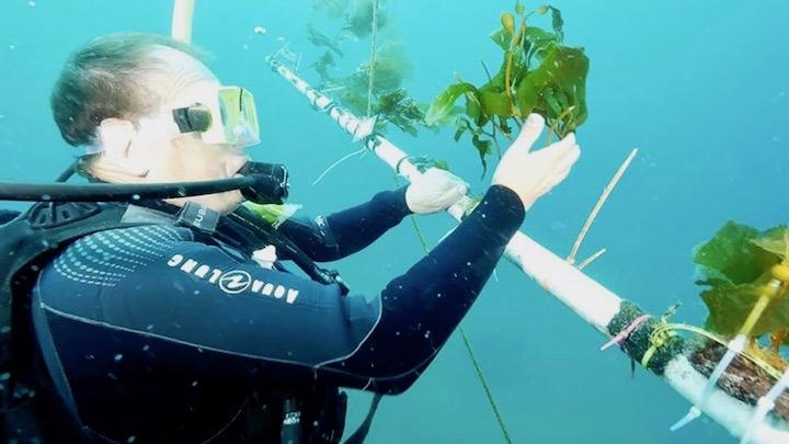 Cultivo algas oceano