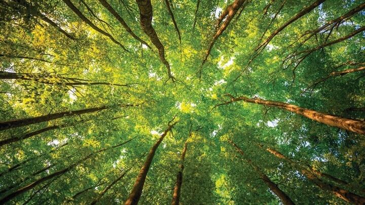 bosque-arboles