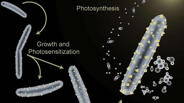 bacteria-energia-solar