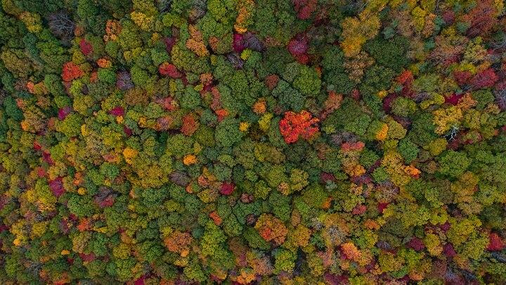 bosque-visto-desde-arriba