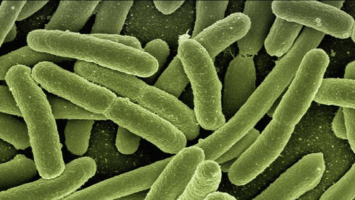 algas-bacterias-hidrogeno