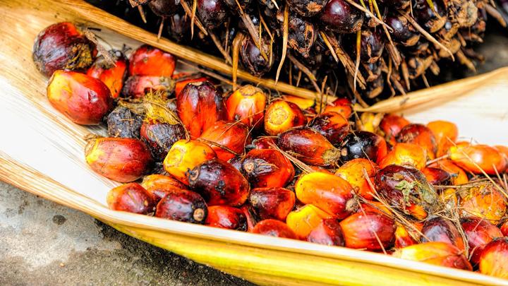 aceite-palma